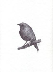 Signed Bird #10 Sparrow