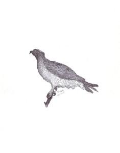 Signed Bird #15 Osprey