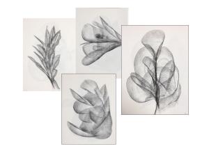 Fascia Collage I